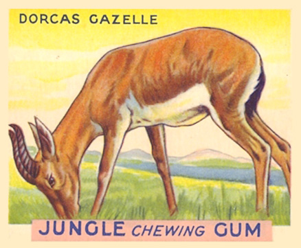 1930 World Wide Gum Jungle Gum   #14 Non-Sports Card