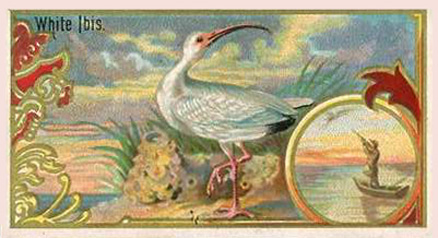 1889 Allen & Ginter Game Birds-Small   # Non-Sports Card